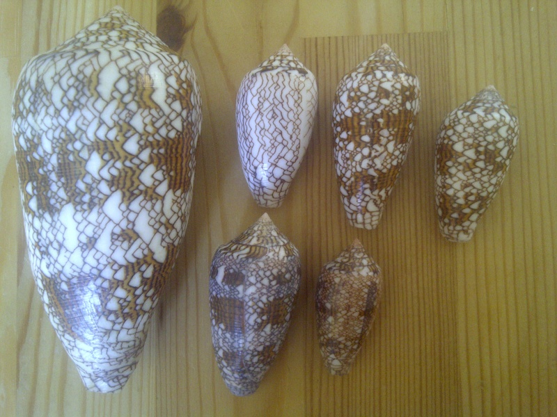 Textile de Madagascar  Altorf17