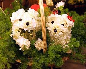 اكتب اسمك وشوف إلى اي الزهور تنتمي.. Im01810