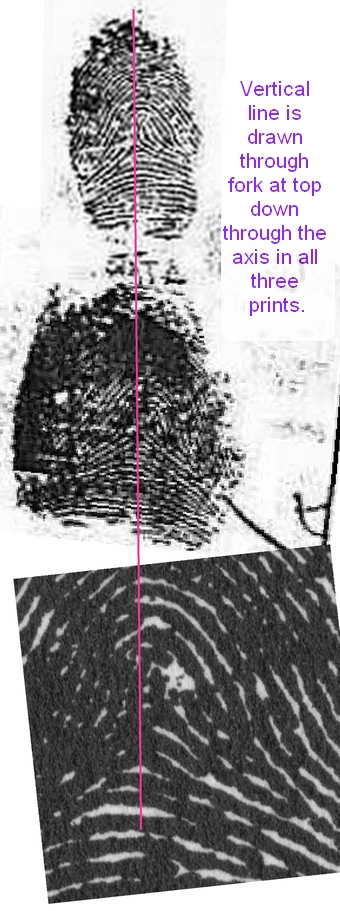 X - WALT DISNEY - One of his fingerprints shows an unusual characteristic! - Page 6 A_cr11