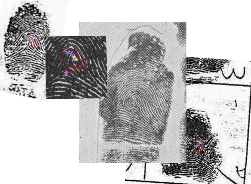 X - WALT DISNEY - One of his fingerprints shows an unusual characteristic! - Page 6 A_disn13