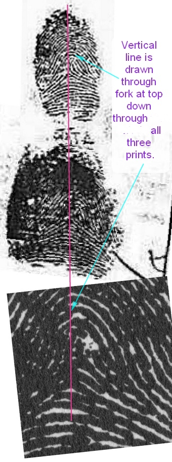X - WALT DISNEY - One of his fingerprints shows an unusual characteristic! - Page 7 Illust10