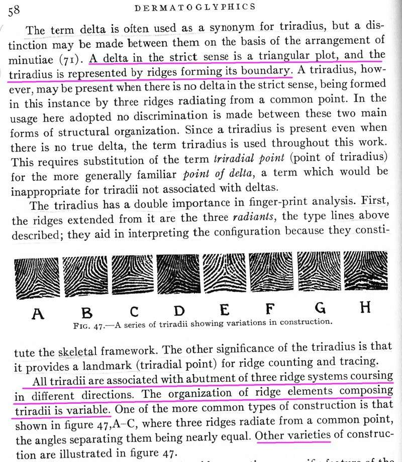 The TRIRADIUS in a fingerprint: how it develops, it's characteristics + a definition! - Page 5 Trirad12