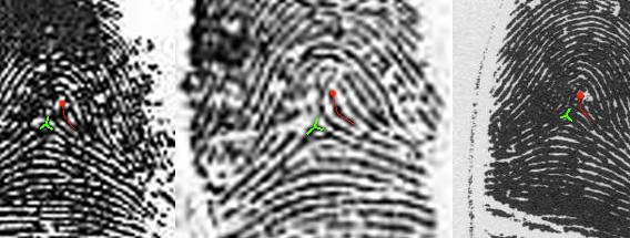 X - WALT DISNEY - One of his fingerprints shows an unusual characteristic! - Page 7 Walt-d10