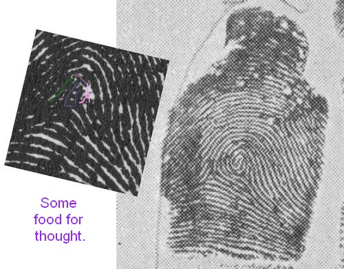 X - WALT DISNEY - One of his fingerprints shows an unusual characteristic! - Page 6 Walt_d10
