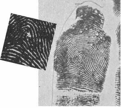 X - WALT DISNEY - One of his fingerprints shows an unusual characteristic! - Page 7 Walt_d11