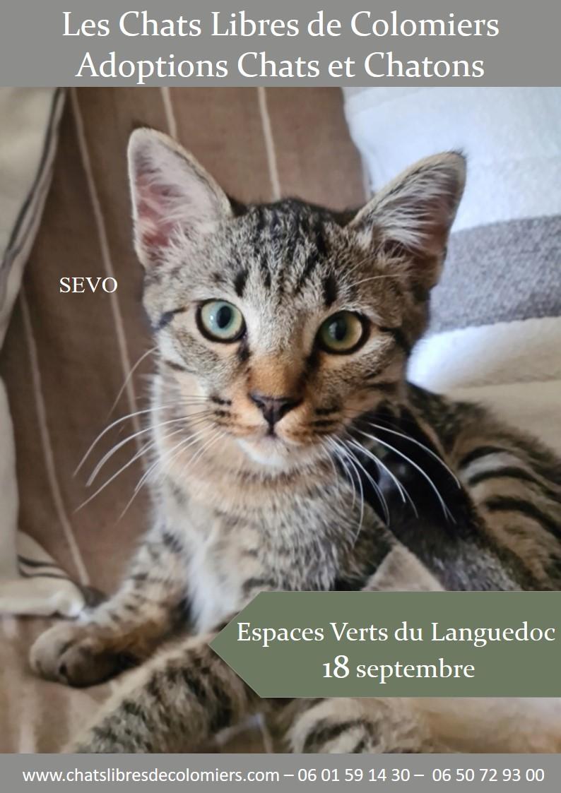 Journée adoption le samedi 18/09 aux Espaces Verts du Languedoc Ja_evl10