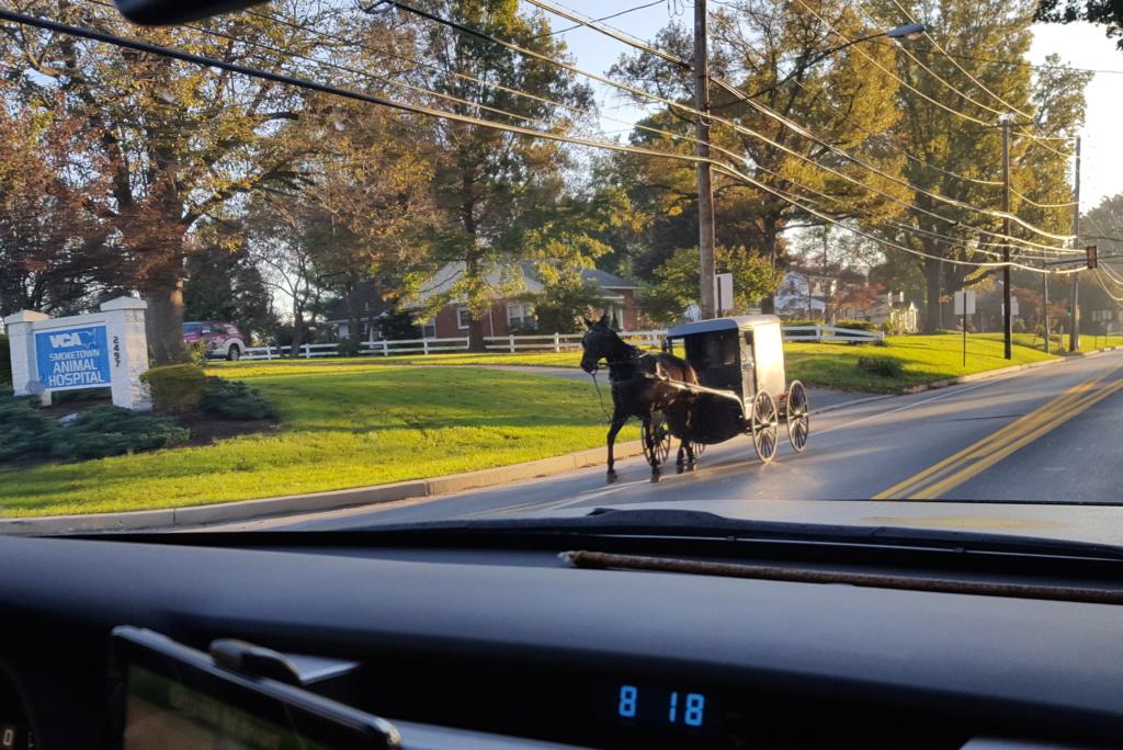 Coyote chez les Amish  20171012