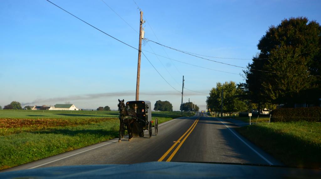 Coyote chez les Amish  Dsc_3011