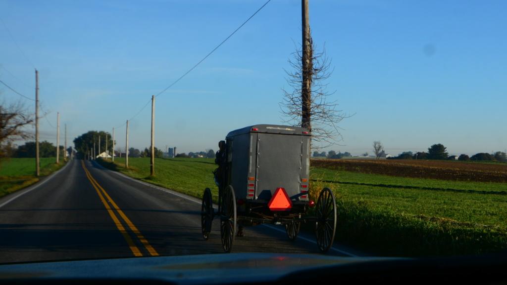 Coyote chez les Amish  Dsc_3013