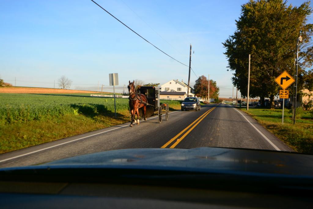 Coyote chez les Amish  Dsc_3015