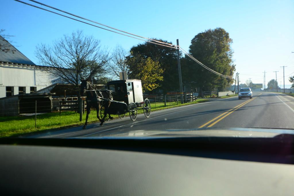 Coyote chez les Amish  Dsc_3113