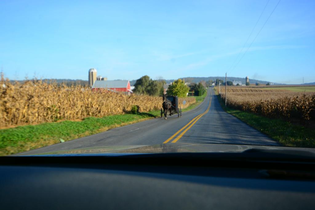 Coyote chez les Amish  Dsc_3116