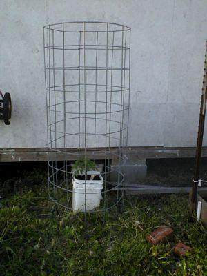Garden doing good 05180113
