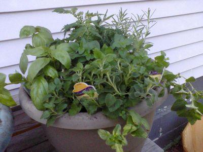Garden doing good 05180114