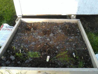Garden doing good 05180116