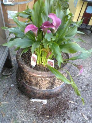 Garden doing good 05180117