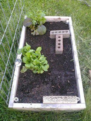 Garden doing good 210