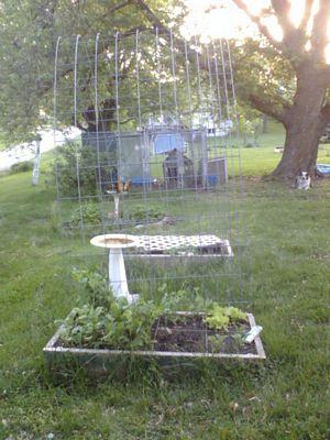 Garden doing good 310