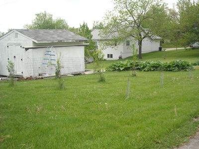 Garden doing good Orchar10