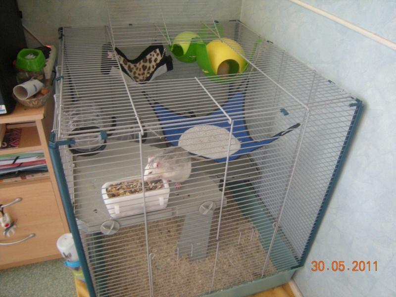 Photos de vos cages - Page 5 Dscn6710