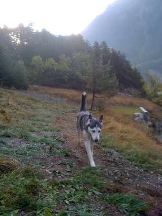 Mira femelle husky lof adoptée: peut on avoir des nouvelles ? Balade10