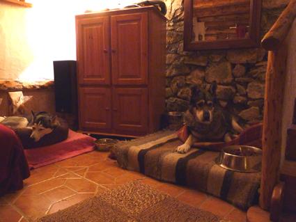 Mira femelle husky lof adoptée: peut on avoir des nouvelles ? Chez_e11
