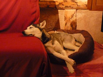 Mira femelle husky lof adoptée: peut on avoir des nouvelles ? Chez_e12