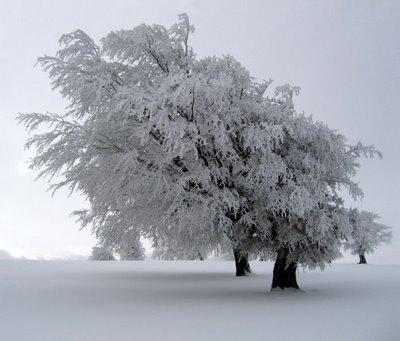 *-*Invernalia*-* [Fortaleza Stark] protegida por FIDELIO  Nieve10