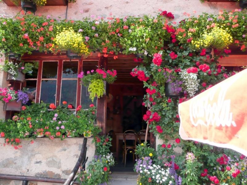 Flore du massif Ecran_12
