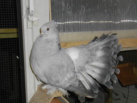 Photos of most of my birds! Bt155910