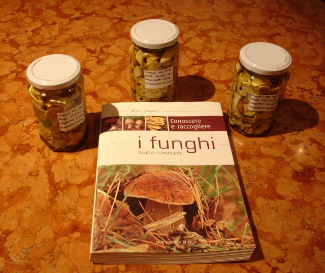 Funghi in Austria - Pagina 3 Funghi10
