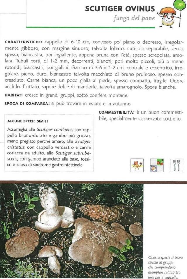 Funghi in Austria - Pagina 3 Scansi10