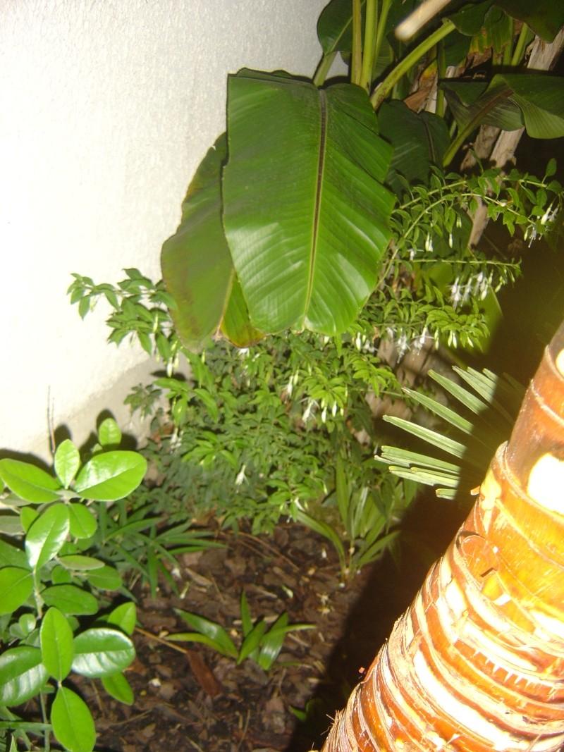 Fuchsia Dsc00210