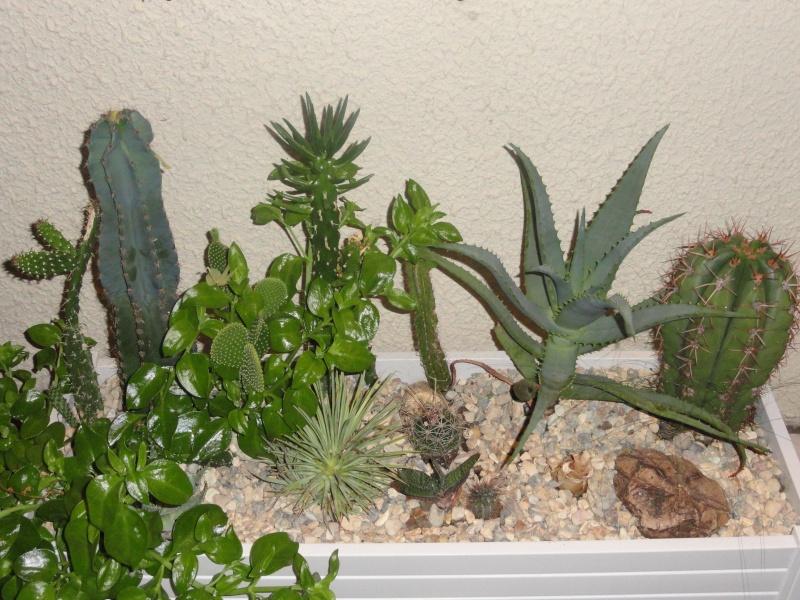 Cactus & co en climat tempéré Dsc01213