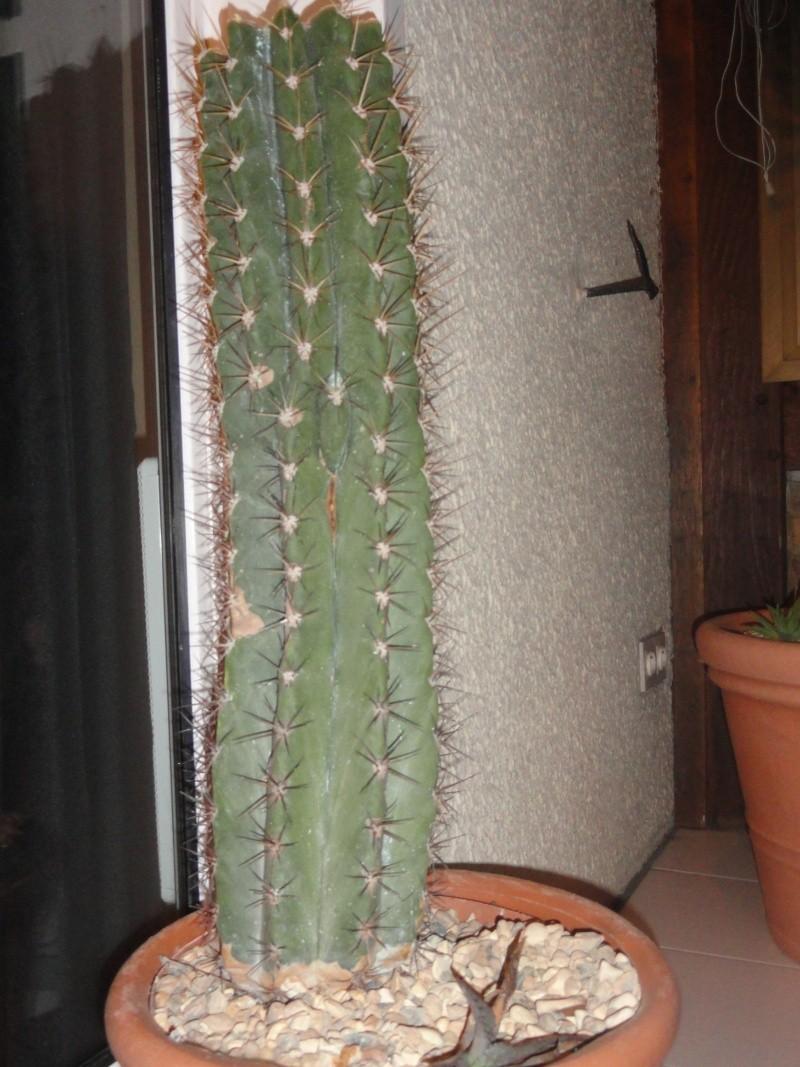 Cactus & co en climat tempéré Dsc01216