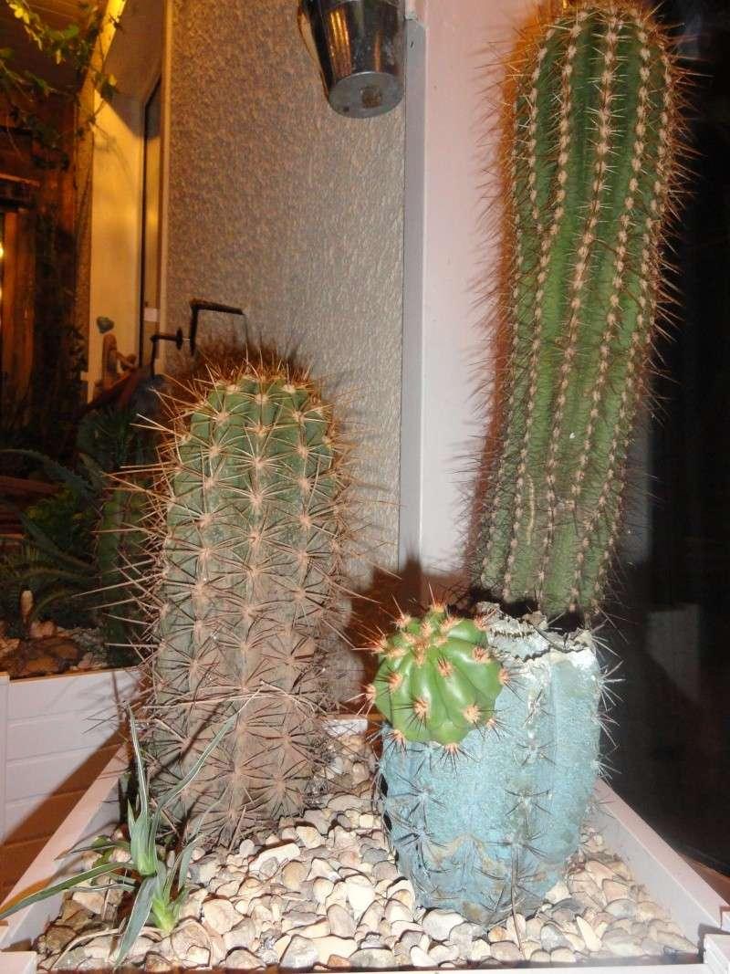 Cactus & co en climat tempéré Dsc01217