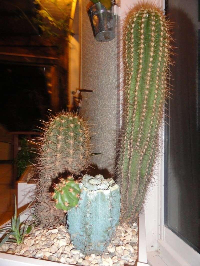 Cactus & co en climat tempéré Dsc01218