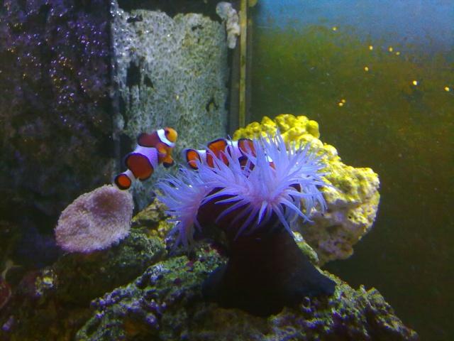 nouvel aquarium eau de mer - Page 2 07052010