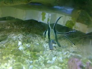 nouvel aquarium eau de mer - Page 2 08052013