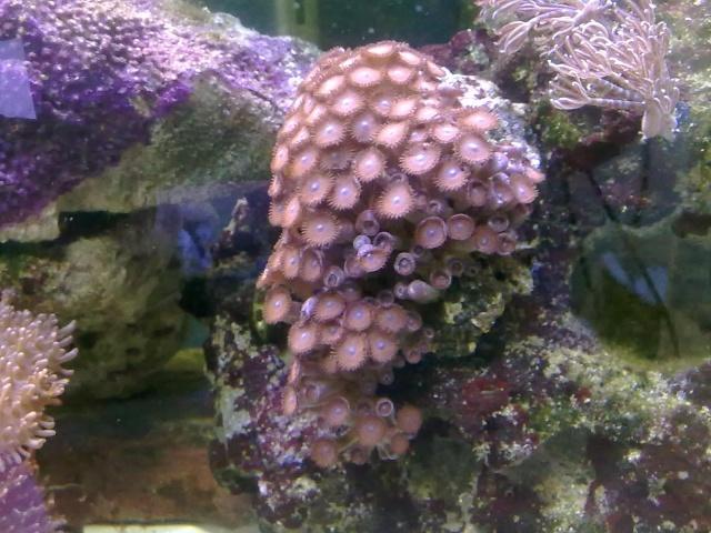 mes coraux 14092010
