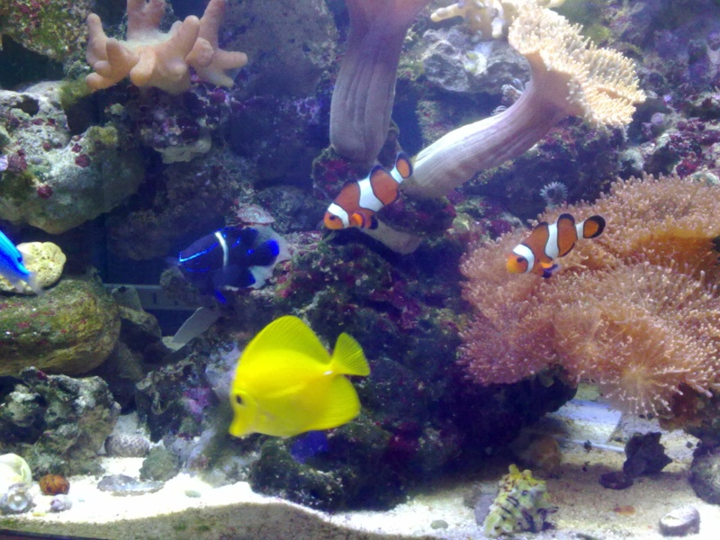 mes poissons 19092014