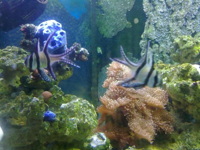 nouvel aquarium eau de mer - Page 2 22042010