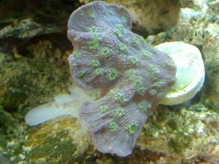 nouvel aquarium eau de mer - Page 2 31052012