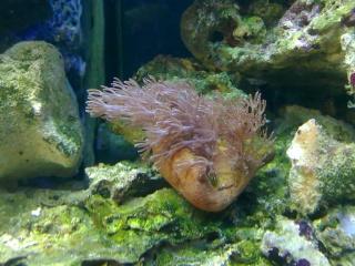 nouvel aquarium eau de mer - Page 2 31052014