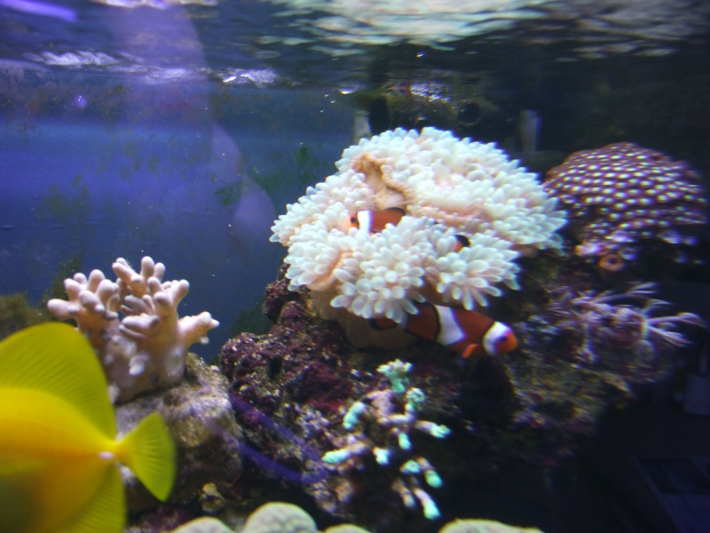 mes coraux Dscf0522
