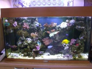 mes coraux Dscf0523