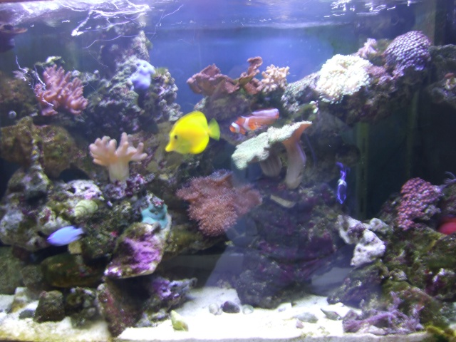mes coraux Dscf0524