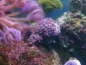 mes coraux 02092012