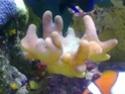 mes coraux 02092013