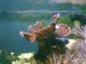 mes coraux 08092011